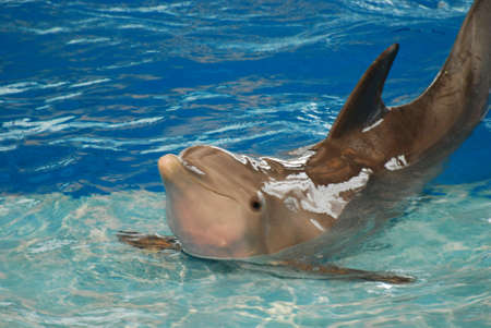 Dolphin holding a pose on a step with his back arched. Standard-Bild