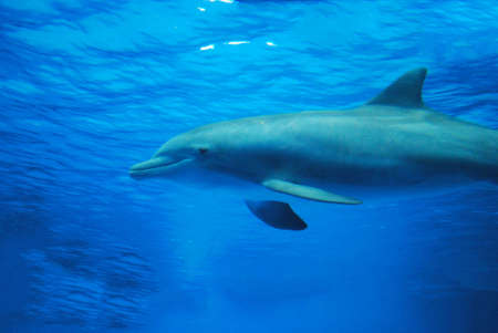 Cute dolphin swimming along underwater. Reklamní fotografie