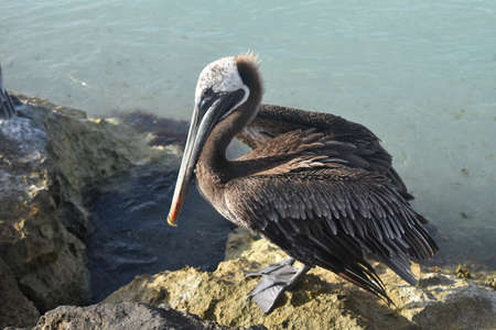 Awesome bird watching photo in aruba