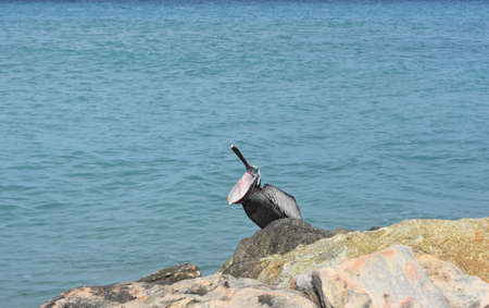 Beautiful blue ocean in the background of a pelican
