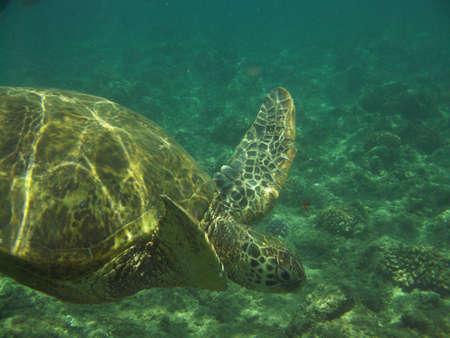Amazing sea turtle swimming along underwater. Foto de archivo