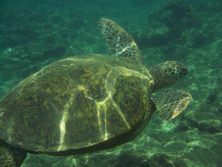 Amazing sea turtle swimming underwater.