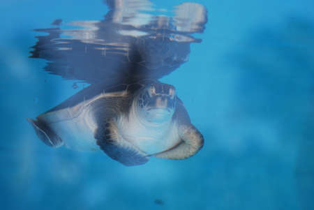 Amazing face of a sea turtle swimming along underwater.