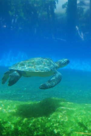 Sea turtle gliding along underwater.