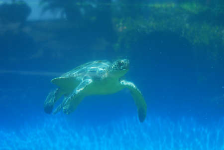 Sea turtle moving along under the water's surface.