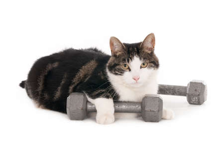 Cat with one paw resting on dumbbell, isolated on white