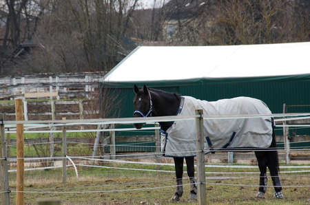 Beautiful horses, covered by a protective blanket in his corral Stock Photo