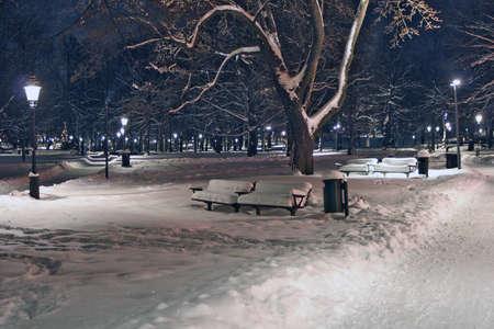 Night Park in Winter