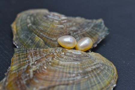 Pearl It is a natural pearl from natural shells that are popularly used to make jewelry.