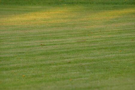 football field Is a green lawn That has been beautifully trimmed Reklamní fotografie - 133032809