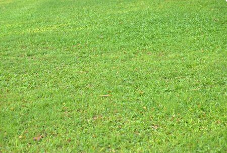 football field Is a green lawn That has been beautifully trimmed Reklamní fotografie - 133027563