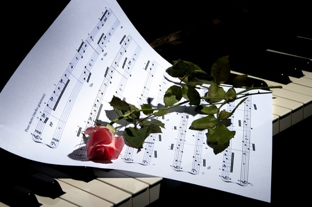 deep Red Rose on Piano keys - horizontal view