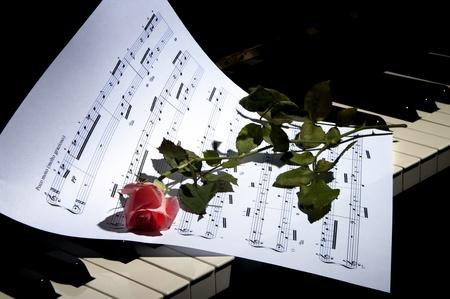 music lyrics: Rose de rojo profundo en Piano keys - vista horizontal  Foto de archivo