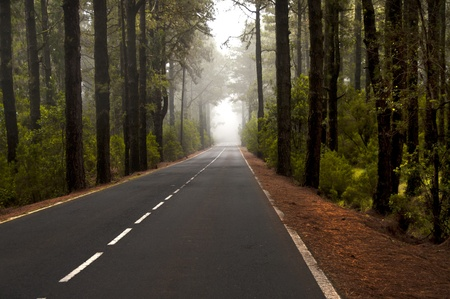 forest crossed by a road in fog photo