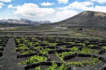 Vineyards in La Geria, Lanzarote, canary islands, Spain. photo