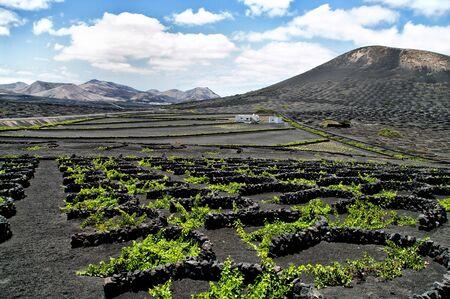 Vineyards in La Geria, Lanzarote, canary islands, Spain. photo