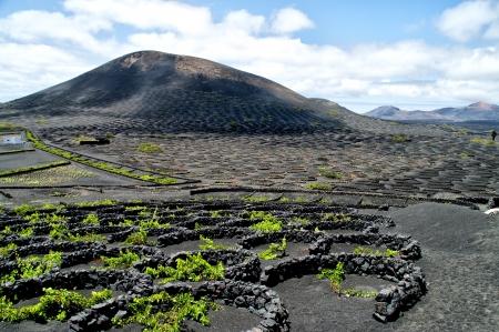 lanzarote: Vineyards in La Geria, Lanzarote, canary islands, Spain. Stock Photo