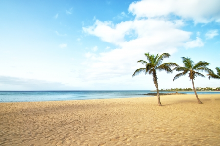 Tropical Beach Palm Tree in lanzarote, canary islands photo