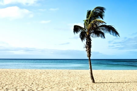 Perfect tropical white sand beach with palm trees  Stock Photo