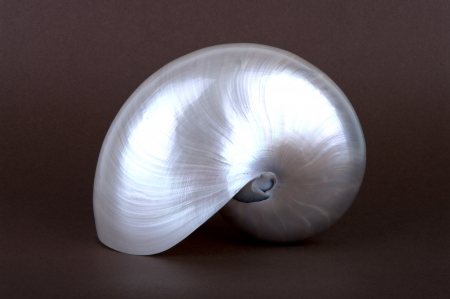 Detailed photo of a pearl shell of a chambered nautilus (Nautilus pompilius)
