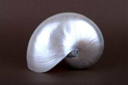 perlas: Foto detallada de una concha de perla de un nautilo (Nautilus Pompilio) Foto de archivo