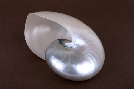Detailed photo of a pearl shell of a chambered nautilus (Nautilus pompilius) photo