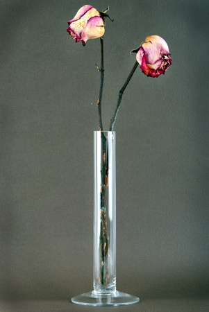 dried yellow and pink roses in a vase photo