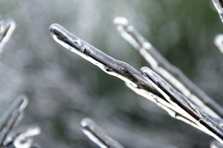 neige qui tombe: branches couvertes de cristaux de neige et de glace