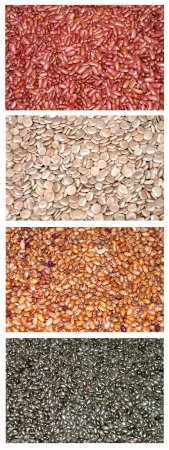 Variety of pulses on white background photo