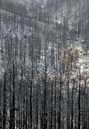 ravaged: 3 days after the forest fire