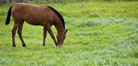 pastureland: Horse grazing in the pasture