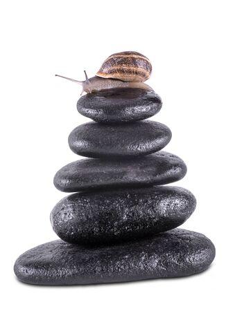 steadiness: snails on balanced zen stones on white