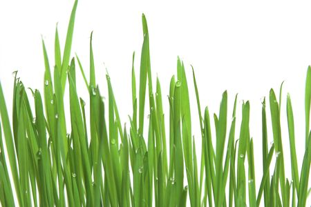 fertilize: Fresh green grass with drops of water, purfect ecology background