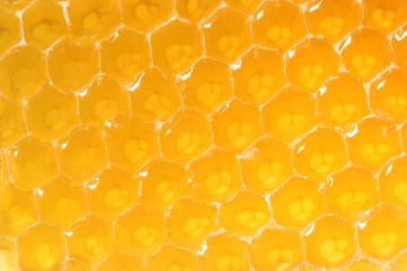 Honeycomb close-up. Stock Photo