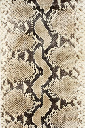 reptile: Snake skin leather close-up.