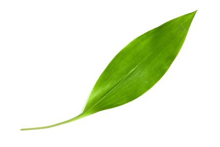 One lily of the valley leaf isolated on white. Stock Photo - 7924351