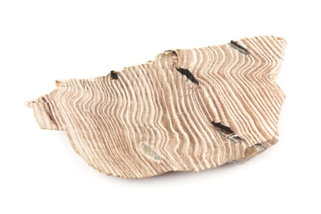 petrified fossil: Polished cross-section of a piece of petrified wood, isolated on white background.
