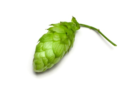 hop plant: One hop cone close-up, isolated on white, view from above. Stock Photo