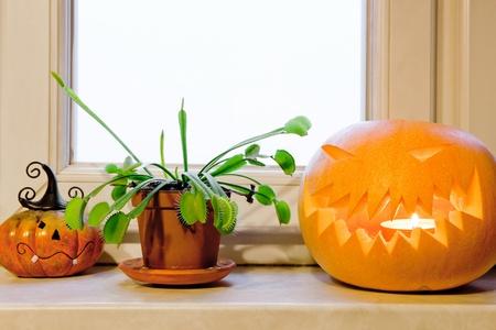 Halloween morning - carved pumpkin, venus flytrap in a pot and pumpkin figurine on a windowsill. photo