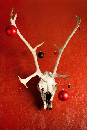 Deer skull decorated for Christmas hanging in a red wall. Stock Photo