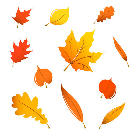 willow tree: Miscellaneous orange fall leaves isolated on white. Illustration
