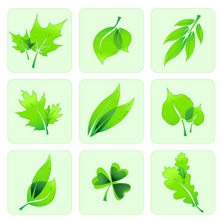 miscellaneous: Miscellaneous green summer leaves icons in a table. Illustration
