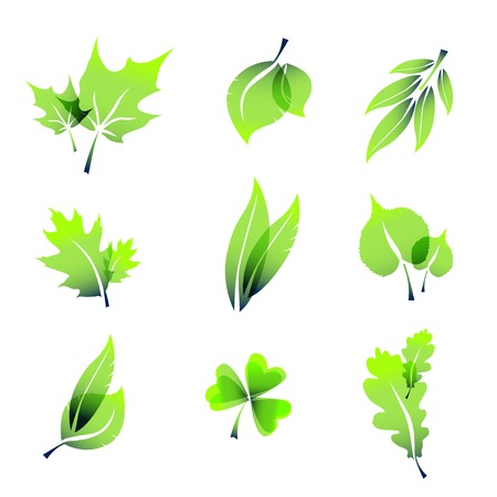 miscellaneous: Miscellaneous summer leaves icons, isolated on white. Illustration