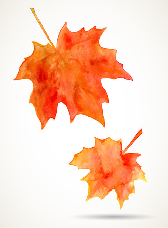 isolated over white: Bright orange watercolor autumn maple leaves isolated over white background.