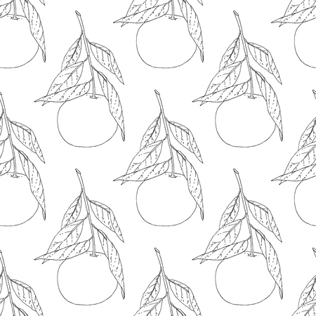 Hand drawn tangerine fruit seamless pattern. Vector background in black and white.