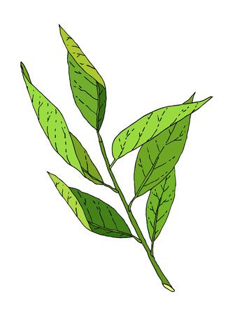 Hand drawn green leaves tree branch sketch. 일러스트
