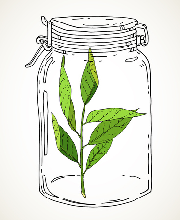 Vector hand drawn illustration with vintage jar and green branch. Contour sketch isolated over white. Nature conservation concept.