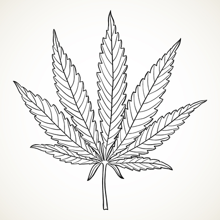Marijuana leaf. Hand drawn narcotic cannabis outline design element. Hemp vector illustration in black isolated over white background.