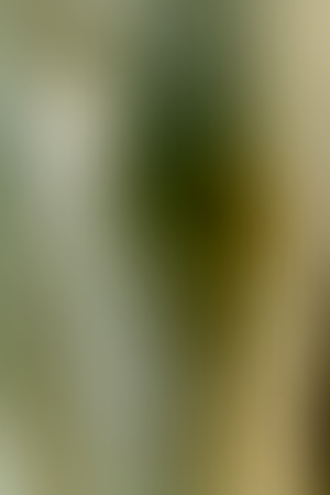 Abstract smooth blur dark green background for any design to put over. Vertical format. Banco de Imagens - 110345139