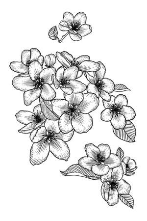 Blooming apple tree flowers. Black and white outline vector illustration isolated over white. Hand drawn nature romantic floral spring drawing. Illustration
